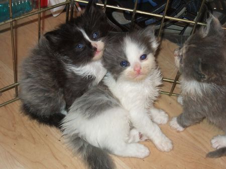 Male Kittens, Rescued & Adopted in October 2009