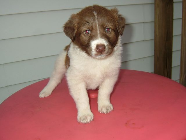 Husky Mix Puppy, Rescued in 2007