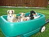 Puppies in a Wagon!!